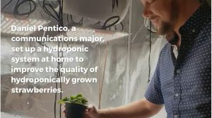 Daniel Pentico, a communications major set up a hydroponic system at home to improve the quality of hydroponically grown strawberries